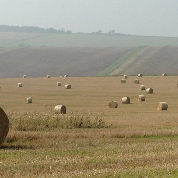 Working beef and arable farm