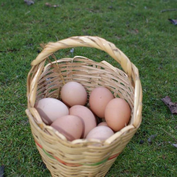 Children can help with egg collecting